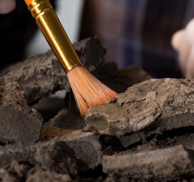 5 תגליות ארכיאולוגיות מרשימות של 2020 שהתעלמנו מהן בגלל הקורונה